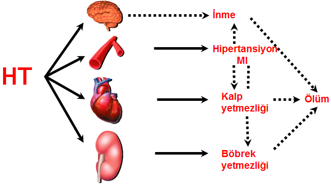 Hipertansiyon ve hedef organ hasarı