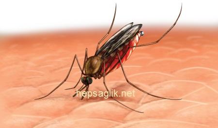 sıtma-hastalığı-sinek