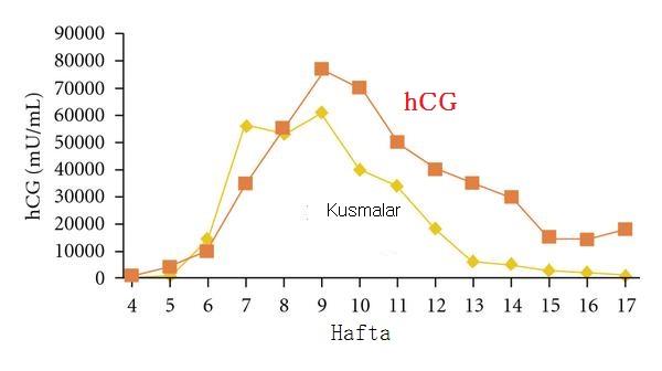 hcg hormon Düzeyi
