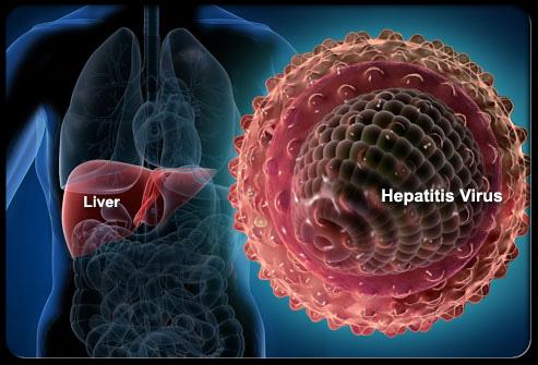 Hepatit B Virüsü ve Karaciğer
