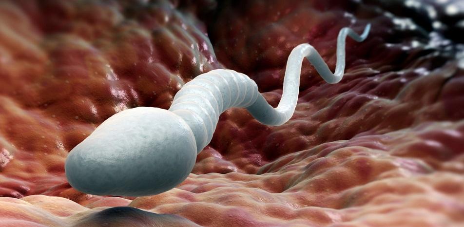 Obezite Sperm Sayısı ve Morfolojisi Olumsuz Etkiler